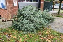 28.11.2020 Tannenbaum Aufstellen